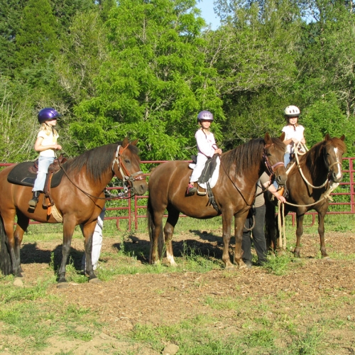 Reddy is in the middel, Berry Knox is on the left, and bay gelding, Valley Oaks Bay Breeze, on the left, with our grand-kids